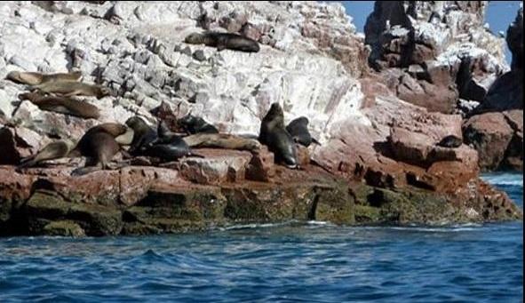 turismo-ica-paracas
