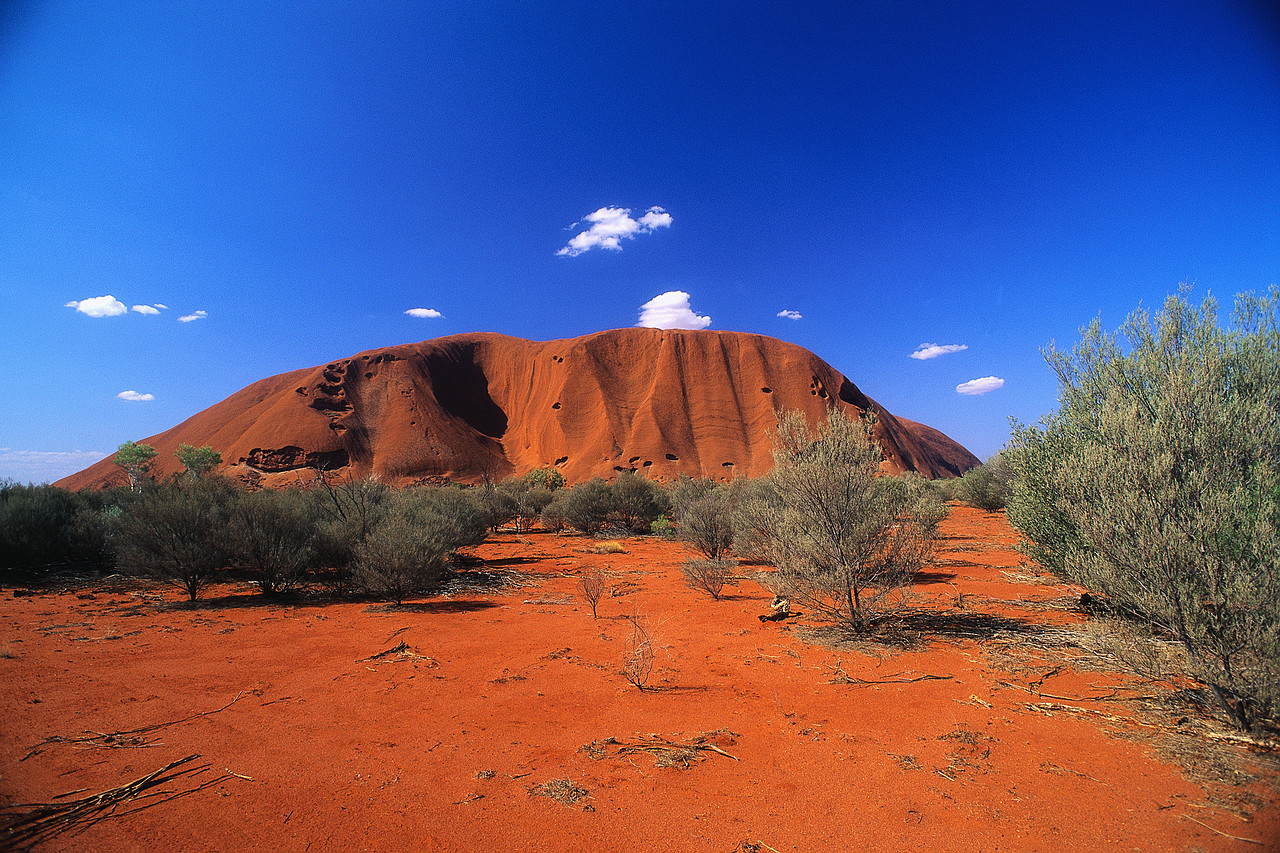 Vegetation in Front of Ayers Rock
