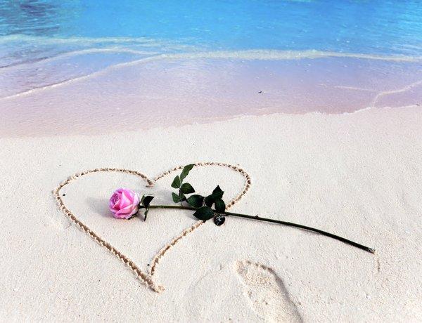 rosa sulla spiaggia